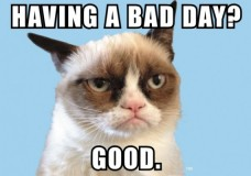 The Grumpy Cat Craze Continues into the New Year
