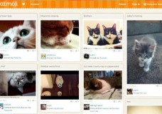 An online social network for your cats